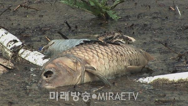 andongdam2-miraetv